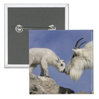 USA, Colorado, Mount Evans. Mountain goat mother 15 Cm Square Badge