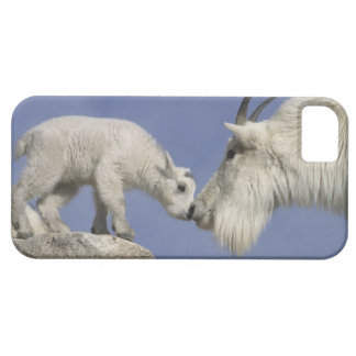 USA, Colorado, Mount Evans. Mountain goat mother Case For The iPhone 5