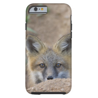USA, Colorado, Pike National Forest. Shy red fox Tough iPhone 6 Case