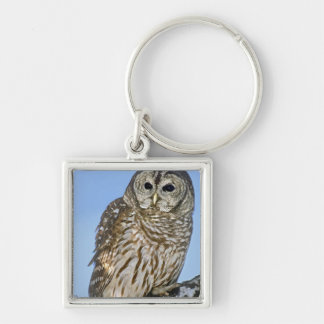 USA, Colorado. Portrait of barred owl perched on Silver-Colored Square Key Ring