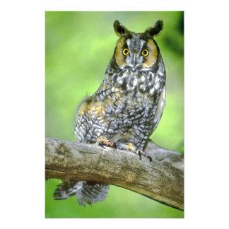 USA, Colorado. Portrait of long-eared owl Photo Art