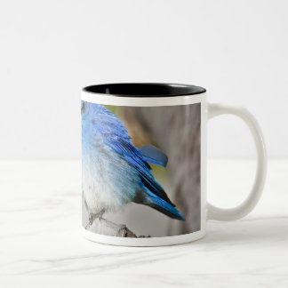 USA, Colorado, Rocky Mountain National Park, Two-Tone Coffee Mug