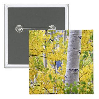 USA, Colorado, Rocky Mountains.  Intimate aspen 2 15 Cm Square Badge