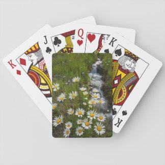 USA, Colorado, San Juan Mountains. Daisies Playing Cards