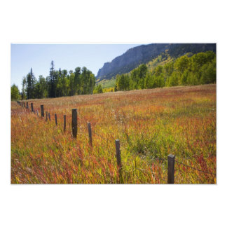 USA Colorado San Juan National Forest along Art Photo