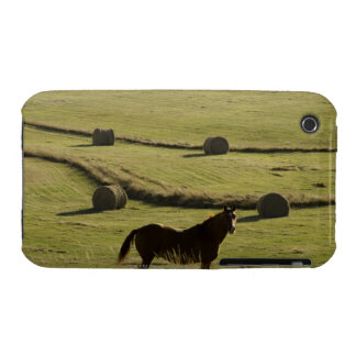 USA, Colorado, Steamboat Springs, hay rolls and iPhone 3 Cover