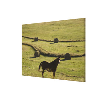 USA, Colorado, Steamboat Springs, hay rolls and Stretched Canvas Print