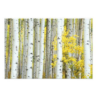 USA, Colorado, White River National Forest, Photo Art