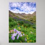 USA, Colorado. Wildflowers In American Basin Poster