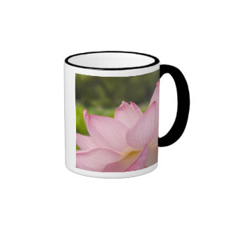 USA, DC, Washington, Kenilworth Aquatic 2 Coffee Mug