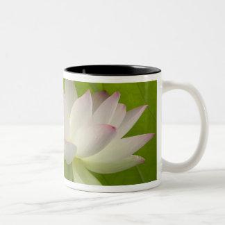 USA, DC, Washington, Kenilworth Aquatic Mug