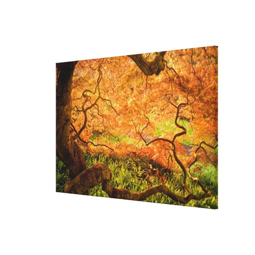 USA, Delaware, Wilmington. Japanese maple Stretched Canvas Prints