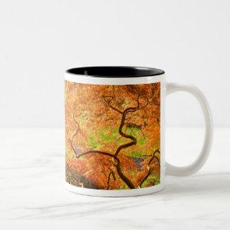 USA, Delaware, Wilmington. Japanese maple Mug