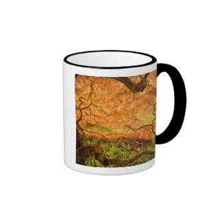 USA, Delaware, Wilmington. Japanese maple Coffee Mugs