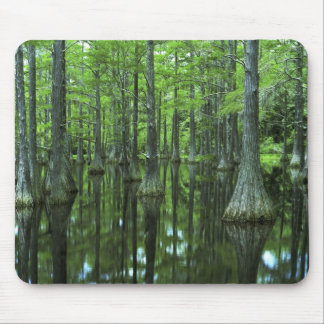USA, Florida, Apalachicola National Forest, Bald Mouse Pad