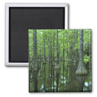 USA, Florida, Apalachicola National Forest, Bald Square Magnet