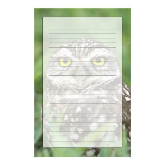 USA, Florida, Cape Coral, Burrowing Owl (Athene Stationery Paper