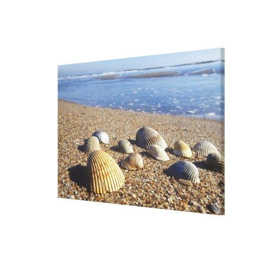 USA, Florida, Coastal Sea Shells Stretched Canvas Print