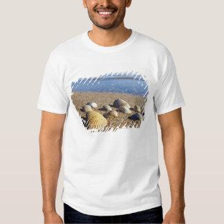 USA, Florida, Coastal Sea Shells Tee Shirts