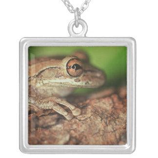 USA, Florida, Cuban Tree Frog. Square Pendant Necklace