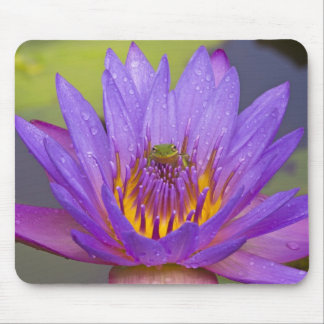 USA, Florida, Lake Kissimmee. Green leaf frog Mouse Pad