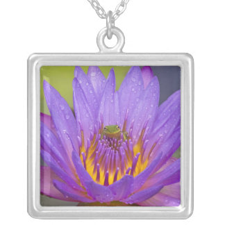 USA, Florida, Lake Kissimmee. Green leaf frog Square Pendant Necklace
