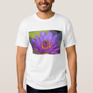 USA, Florida, Lake Kissimmee. Green leaf frog T-shirt