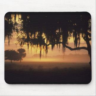 USA, Florida, Lake Kissimmee. Sunrise silhouette Mouse Pad