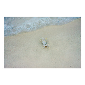 USA, Florida. Little Crab In The Surf Poster