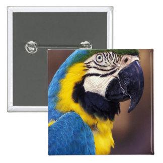 USA, Florida. Macaw 15 Cm Square Badge