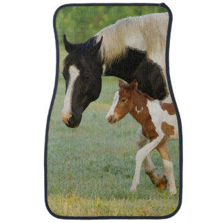 USA, Florida, Newborn Paint filly Car Mat