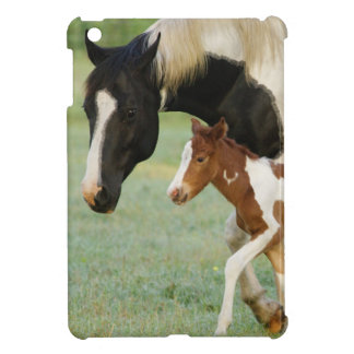 USA, Florida, Newborn Paint filly Case For The iPad Mini
