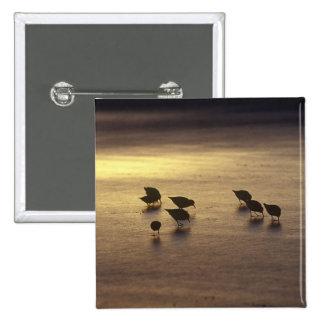 USA, Florida, Sanderlings 15 Cm Square Badge