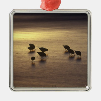 USA, Florida, Sanderlings Metal Ornament