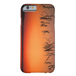 USA, Florida. Silhouettes of dead tree branches Barely There iPhone 6 Case