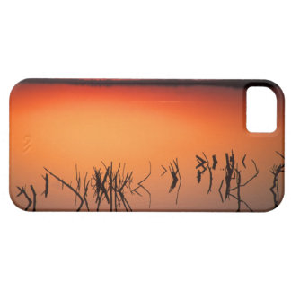 USA, Florida. Silhouettes of dead tree branches iPhone 5 Cases
