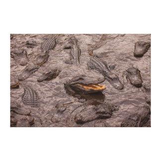 USA, Florida, St. Augustine, Alligators Canvas Print