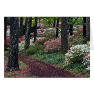 USA, Georgia, Callaway Gardens. Pathway Card