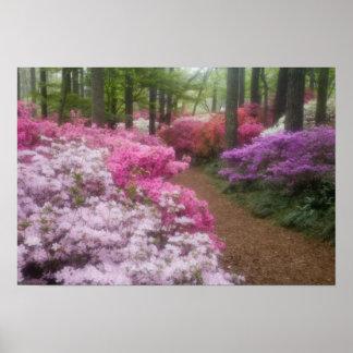USA; Georgia; Pine Mountain. Azaleas at 2 Poster