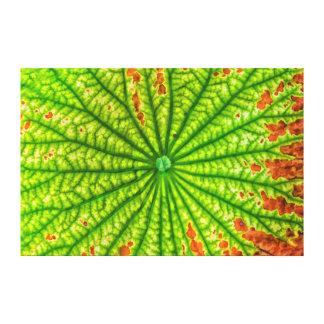 USA, Georgia, Savannah, Close Up Of Lotus Leaf Gallery Wrap Canvas