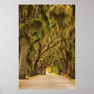 USA, Georgia, Savannah, Entrance Drive Poster