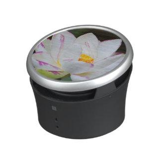 USA, Georgia, Savannah, Lootus Flower Blooming Speaker