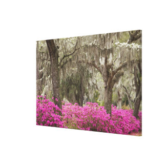 USA, Georgia, Savannah, Spring at Historic Canvas Prints