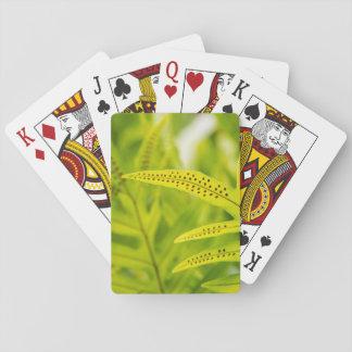 USA, Hawaii, Big Island. Tropical Green Fern Poker Deck