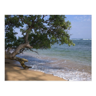 USA, Hawaii, Kauai, beach scenic. RF) Postcard