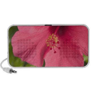 USA, Hawaii, Kauai, Hibiscus iPod Speaker