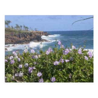 USA, Hawaii, Kauai, near Kapaa, northwest Postcard