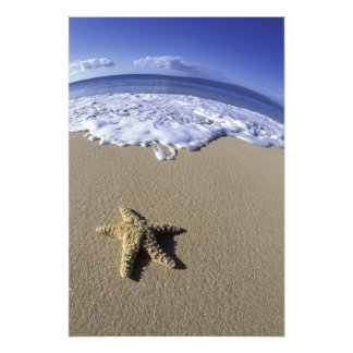 USA, Hawaii, Maui, Makena Beach, Starfish and Photograph