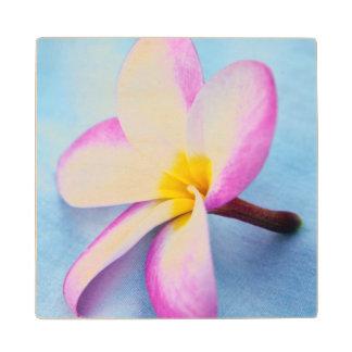 USA, Hawaii, Oahu, Plumeria flowers in bloom 2 Maple Wood Coaster