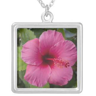 USA, Hawaii, Oahu. The Hibiscus is the 2 Square Pendant Necklace